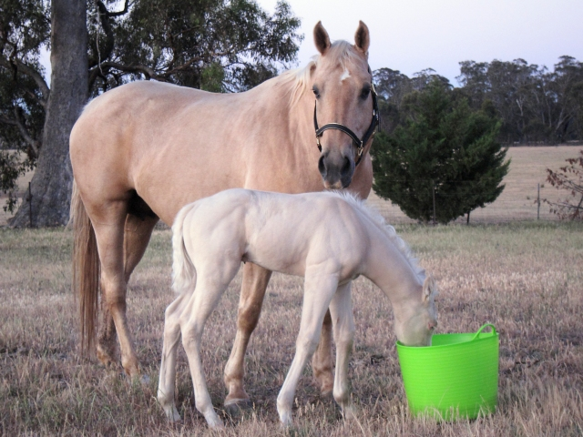 Image of horse and colt
