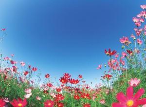 Image of flower garden